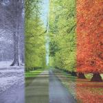 background image_4 seasons